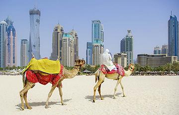Экспорт ОАЭ: Маркетинговые исследования и поиск партнеров